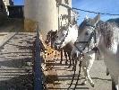 Rutas a Caballo La Tinença Deportes de aventura Rutas a Caballo La Tinença