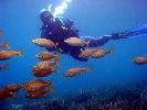 Centro de Buceo La Isleta Deportes de aventura Centro de Buceo La Isleta